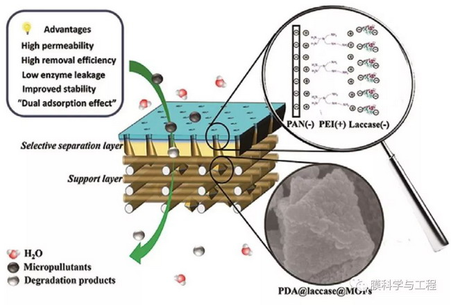 """基于MOFs的""""3D修饰""""制备高通量生物催化膜改性策略"""